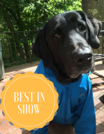 Best in Show: 35-45 Degrees and Sunny (What to Wear)