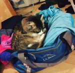 FIS Considers Cat-and-Dog Daycare for World Cup Skiers