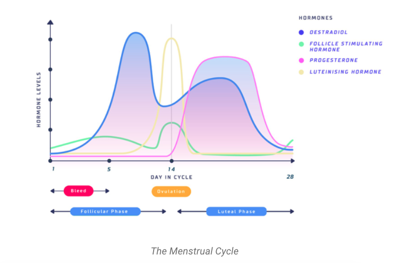 Training, Performance, and the Menstrual Cycle: A Primer